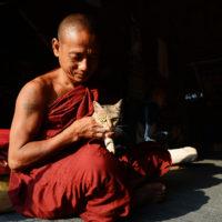Monk with cat in Bagan, Myanmar